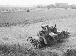 Mähdrescher Claas Herkules bei Ernst Hartel in Berge, ca. 1955. Im Bildhintergrund ist noch die traditionelle Form der Getreideernte mit zu Stiegen aufgerichteten Garben zu sehen. Foto: Privatbesitz Hartel.